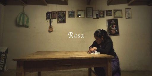 Rosa_TW
