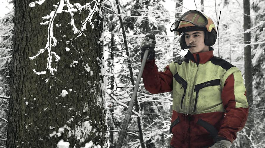 Ins Holz | 99.media